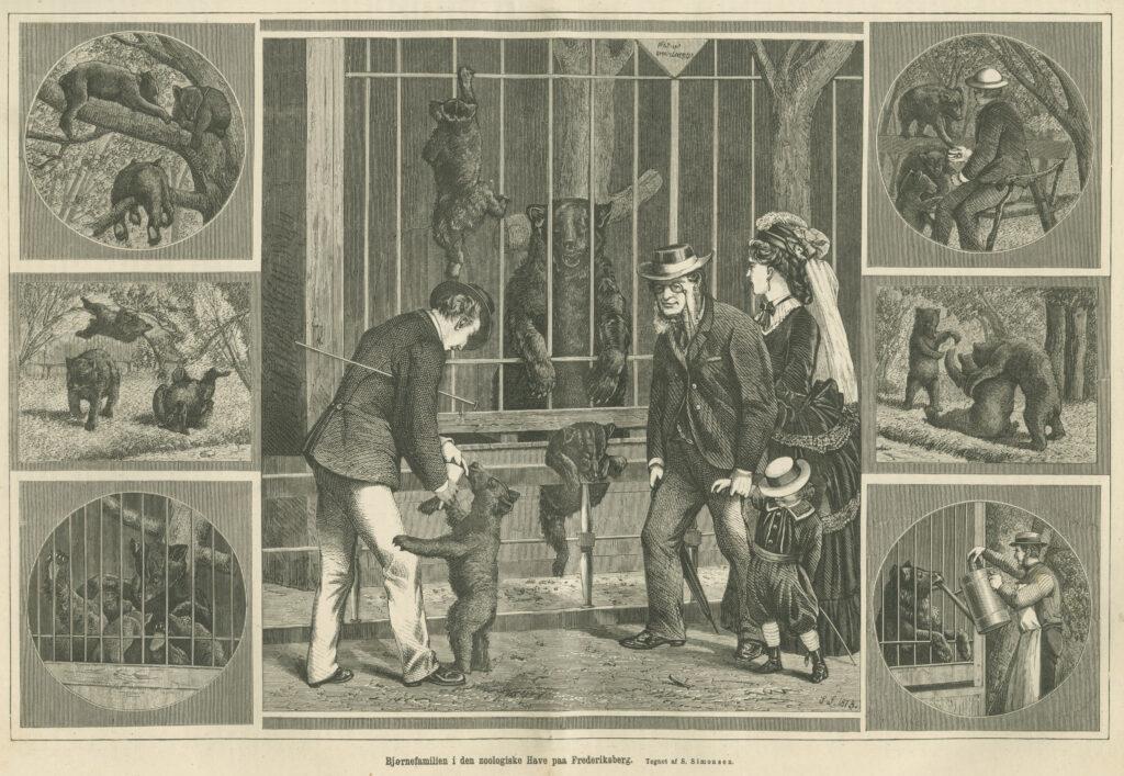 Bjørne i Zoologisk have. Tegning af S. Simonsen. (Illustreret Tidende 1872-73)
