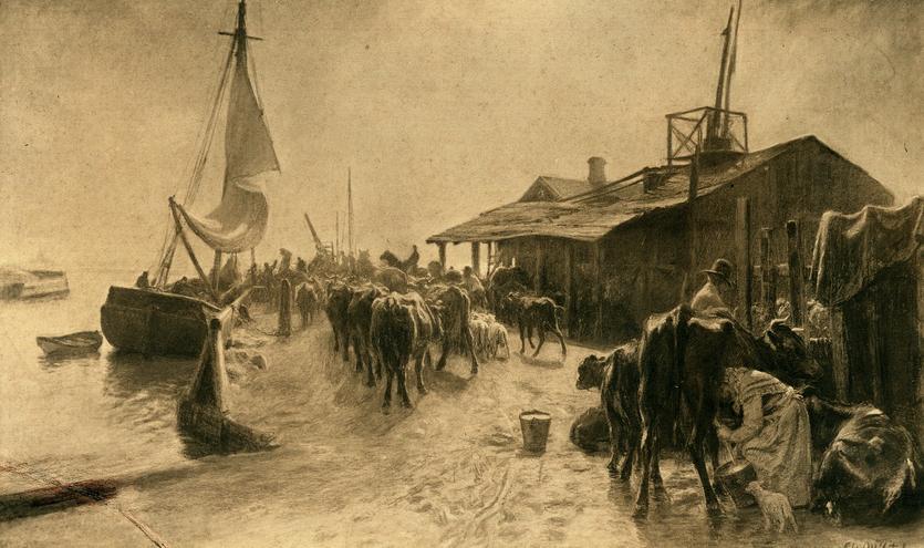 Christian Mølsteds maleri af kreaturer der udskibes fra Kastrup Havn 1896.